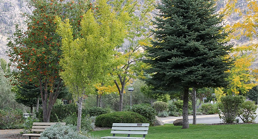 RFP Urban Forestry Plan and Tree Management Bylaw June 28